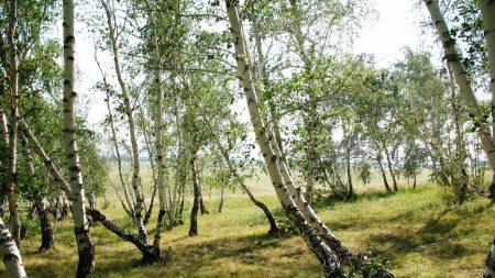 forest, nature, landscape