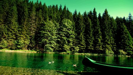 forest, river, boat