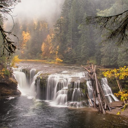 forest, river, waterfall