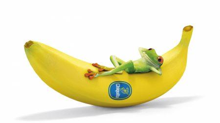 frog, banana, lying