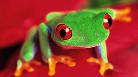 frog, eyes, color