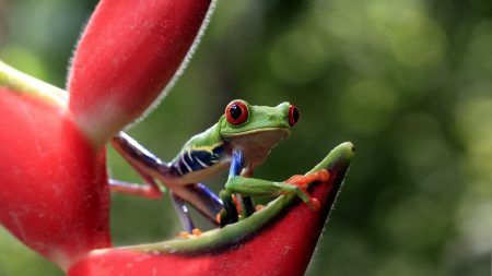 frog, eyes, flower