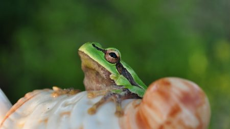 frog, face, sitting