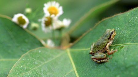 frog, grass, leaf