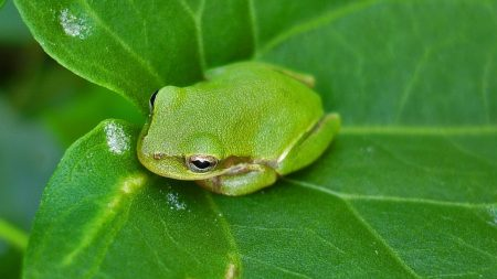 frog, leaf, surface