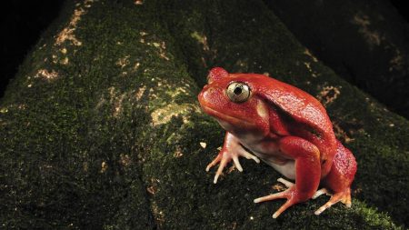 frog, moss, unusual