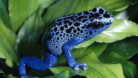 frog, unusual, grass