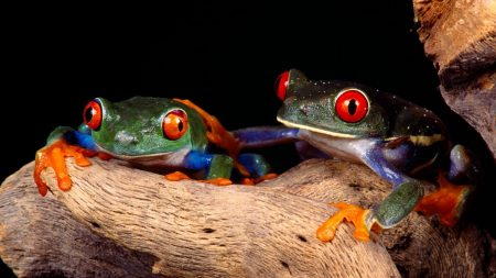 frogs, couple, unusual