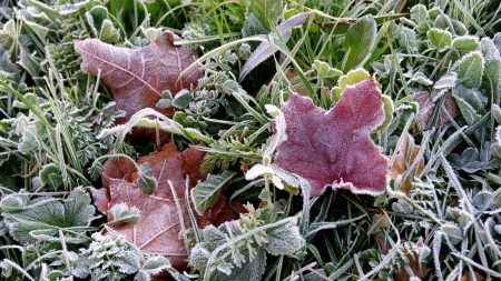 frosts, earth, frost