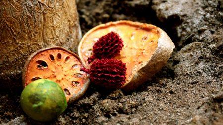 fruit, exotic, halves