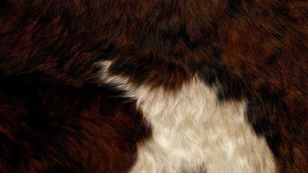 fur, bright, texture