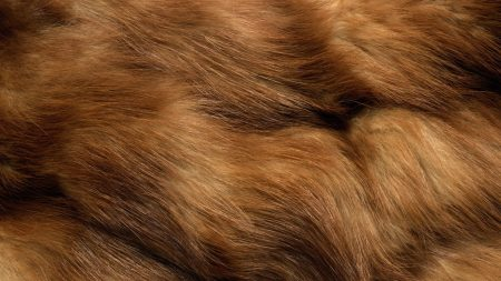 fur, spotted, animal