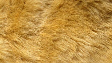 fur, wool, hair
