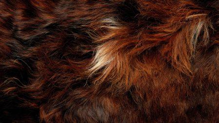 fur, wool, long-haired