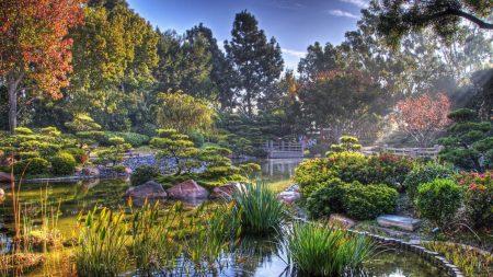 garden, pond, vegetation