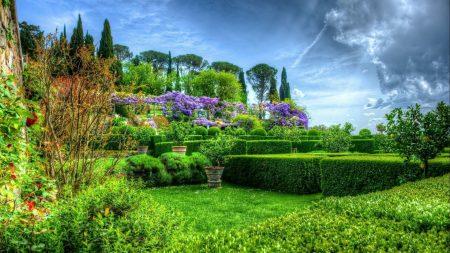 garden, shrubs, flowers