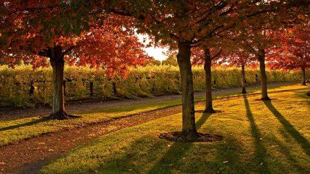 garden, trees, autumn
