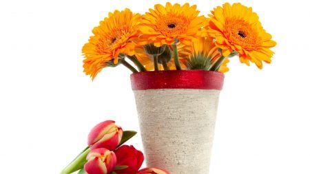 gerbera, bouquet, tulips
