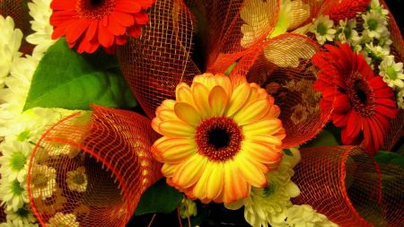 gerbera, colorful, flowers