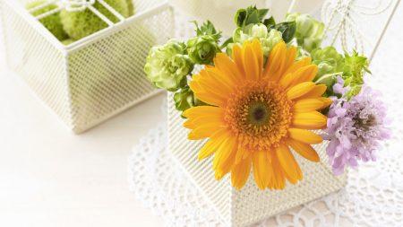 gerbera, flowers, boxes