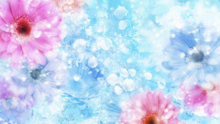 gerbera, flowers, buds