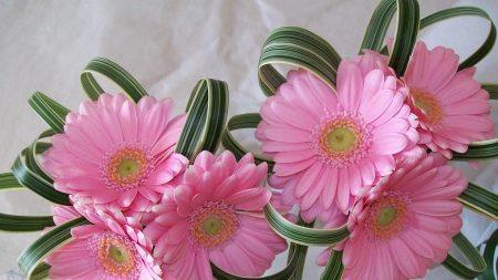gerbera, flowers, decor
