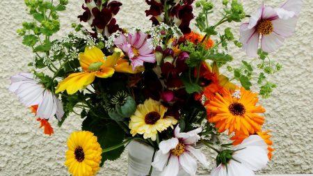 gerbera, flowers, different