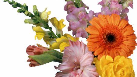 gerbera, gladiolus, flowers