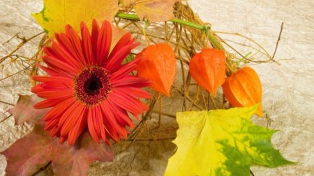 gerbera, physalis, leaves