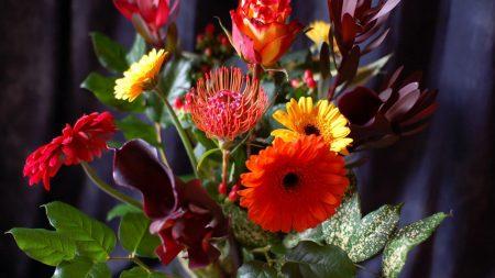 gerbera, roses, calla lilies