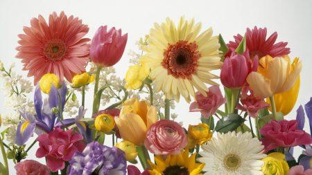 gerberas, tulips, roses