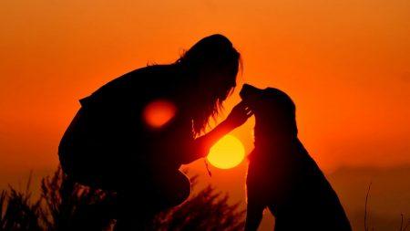girl, dog, light