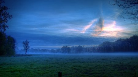 glade, fog, trees