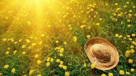 glade, hat, dandelions