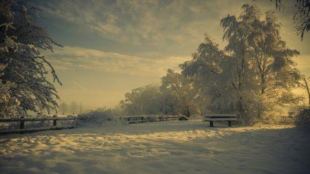 glade, snow, winter
