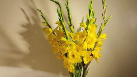 gladioli, yellow, bouquet