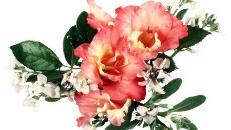 gladiolus, flowers, bouquets