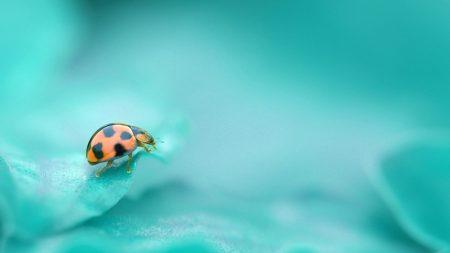 god, ladybug, leaf