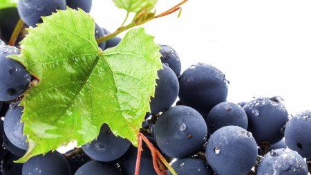 grapes, berries, fruit
