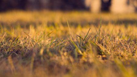 grass, autumn, dry