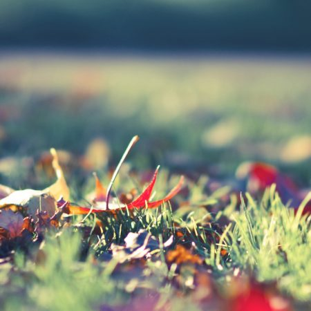 grass, autumn, leaves