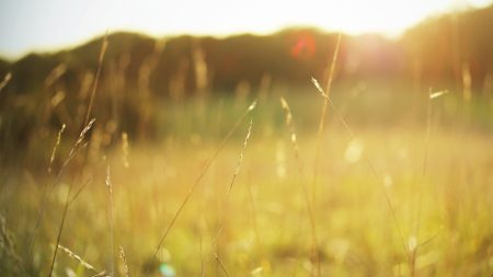 grass, autumn, light