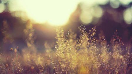 grass, background, blur