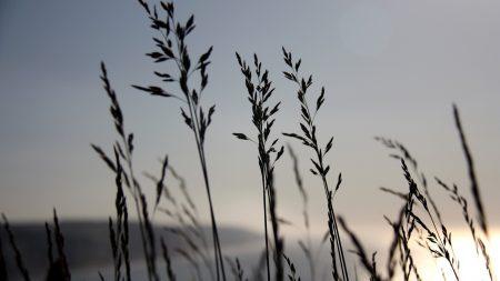 grass, blue, sky