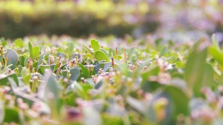 grass, bright, light