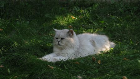 grass, cat, furry