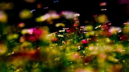 grass, colorful, glare