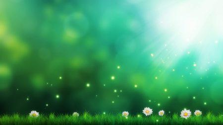 grass, daisies, light