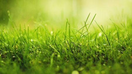 grass, dew, color