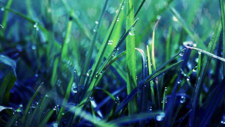grass, dew, drop